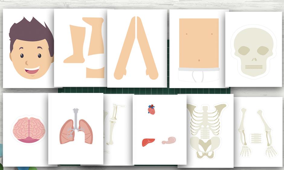 descarga gratis para imprimir cuerpo humano aula360