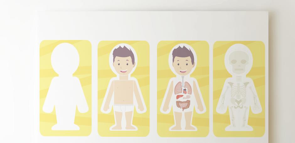 plantilla para imprimir aula360 cuerpo humano profesores
