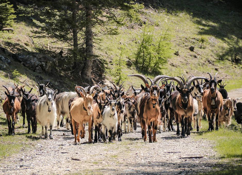 Tierische Begegnungen am Weißenbrunnersee