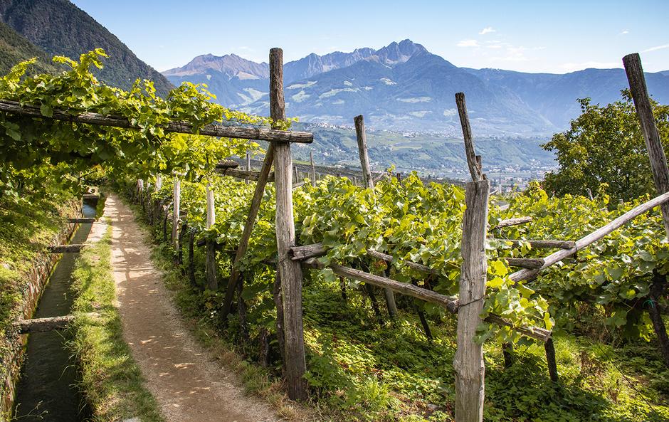 Algunder Waalweg Algund Dorf Tirol Bergurlaub mit Hund Urlaub mit Hund Wandern mit Hund Südtirol
