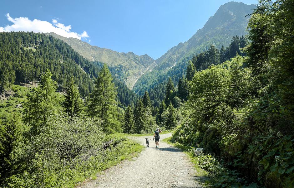 Wandern in Südtirol Bergurlaub mit Hund Videgg Schenna Bergurlaub mit Hund Urlaub mit Hund Wandern mit Hund