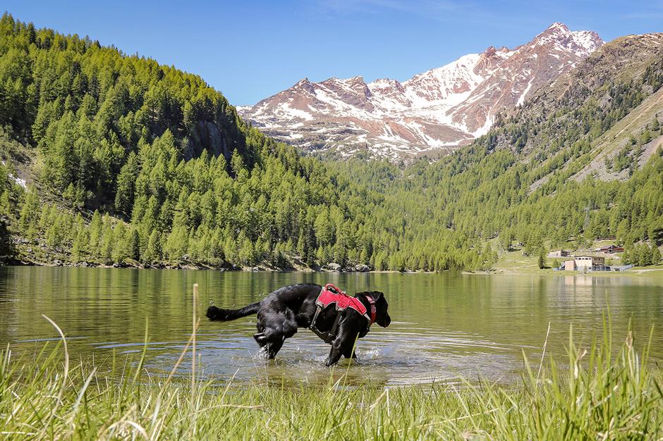 Bergurlaub mit Hund Urlaub mit Hund Wandern mit Hund Südtirol Ultental