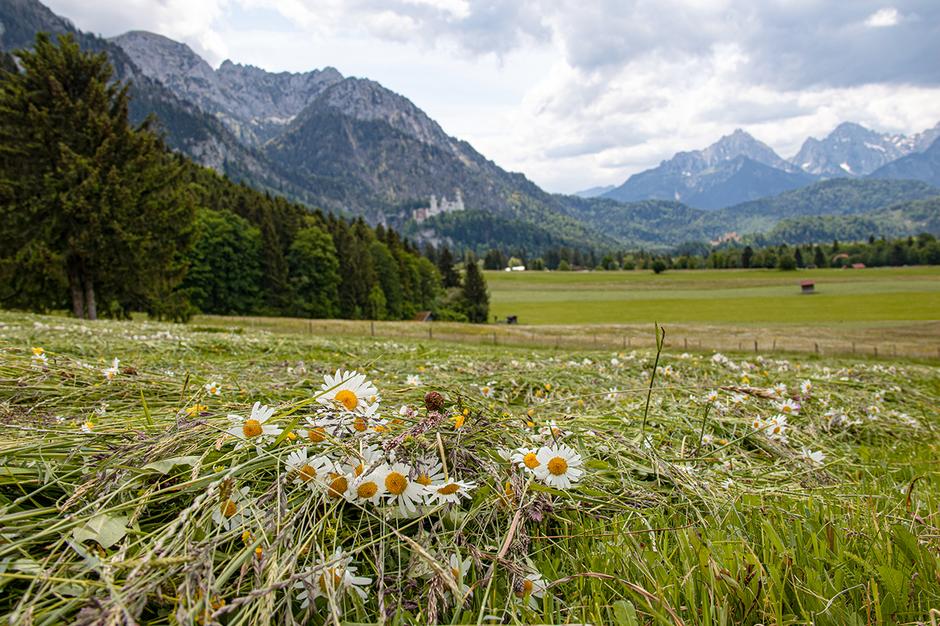 Wandern im Allgäu Tegelberg Ostallgäu, Wandern in Bayern, Wandern mit Hund, Urlaub mit Hund, Bergurlaub mit Hund