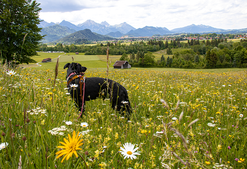 Wandern in Bayern, Wandern mit Hund, Urlaub mit Hund, Bergurlaub mit Hund, Wandern im Allgäu