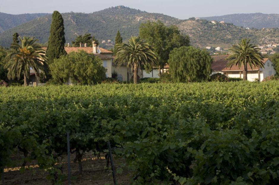 De wijngaarden en de wijnmakerij van Chateau Anguieroun