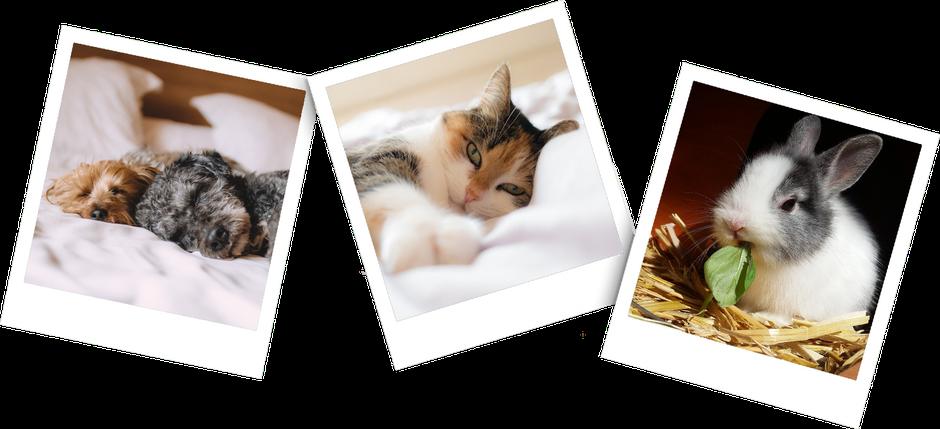 Drei Polariod Bilder, eins mit zwei schlafenden Hunden, eins mit einer liegenden Katze und eins mit einem Kaninchen das im Stroh sitzt und ein Blatt frisst.