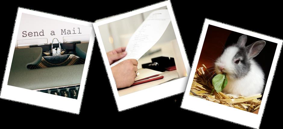 Drei Polaroid Bilder, eines mit der Aufforderung Send a Mail, eines mit einem Blatt Papier in der Hand und eines mit einem Kaninchen welches im Stroh sitzt und ein Blatt frisst.