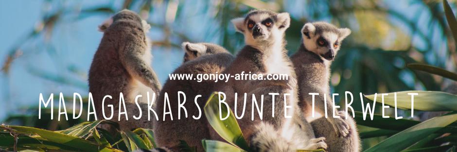 Madagaskar Tierwelt, Madagaskar Reise