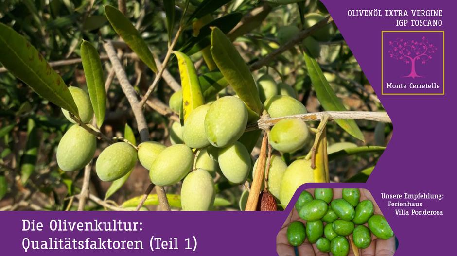 Die Olivenkultur: Qualitätsfaktoren