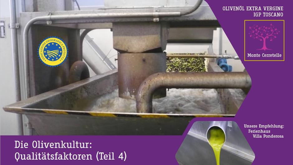 Die Olivenkultur: Produktion