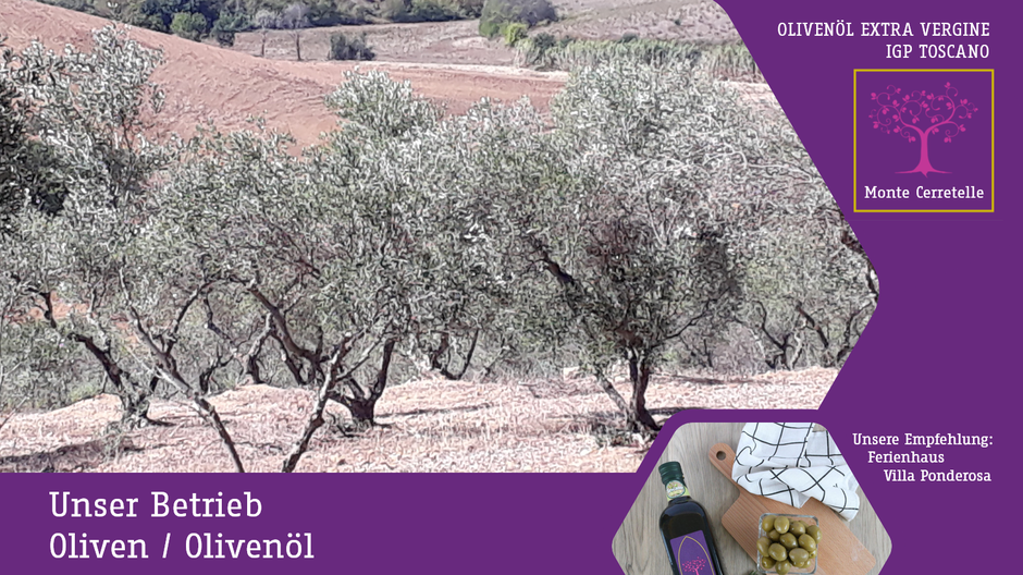 Oliven & Olivenöl