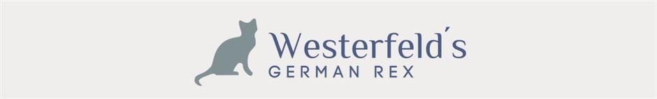 Hannover Germanrex Katzenzucht Tierarzt Westerfelds