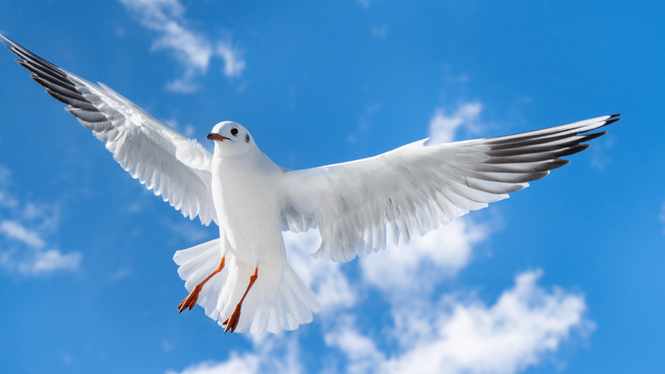 羽を広げた鳥