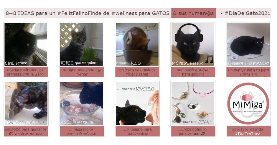 8+8 ideas #FelizFelinoFinde #wellness para Gatos & sus human@s - #DíaDelGato2021