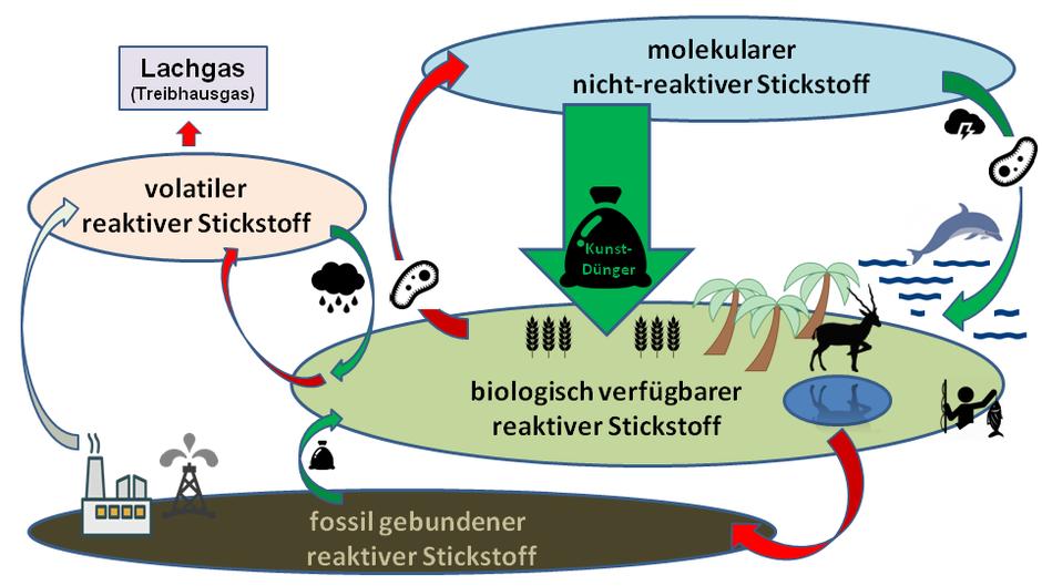 Stickstoffkreislauf reaktiver Stickstoff Künstdünger