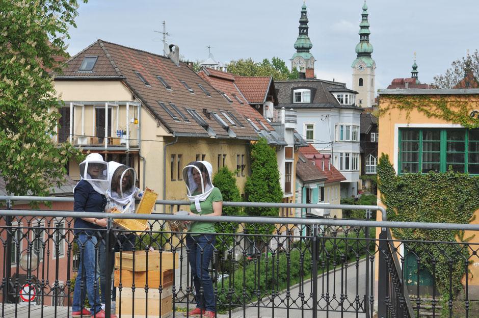 Bienenhaltung in der Stadt Klagenfurt am Wörthersee