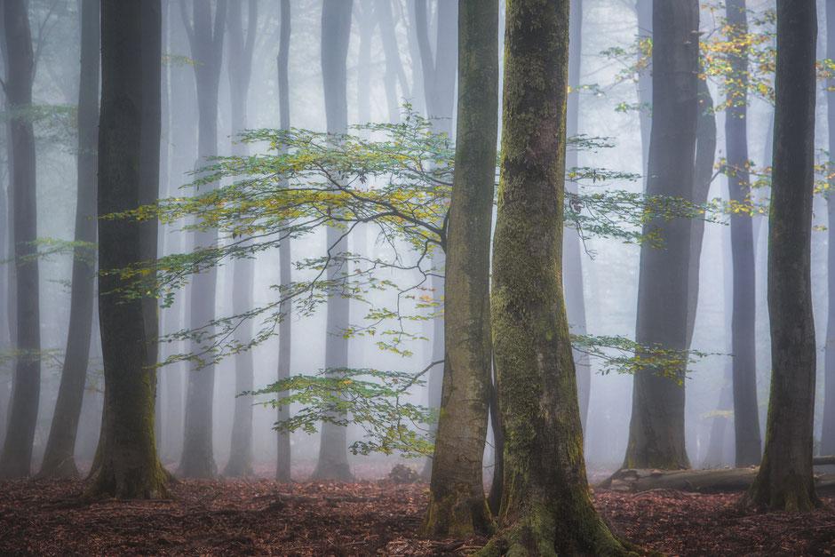 Herfst en mist in het Speulderbos en Sprielderbos