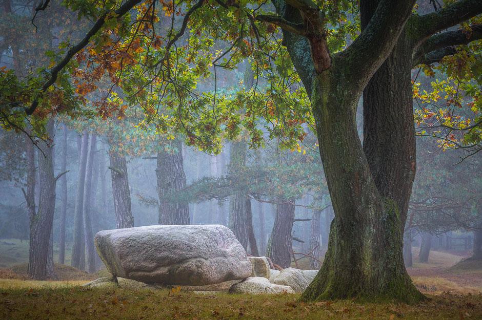 Hunebed Gasterse Duinen