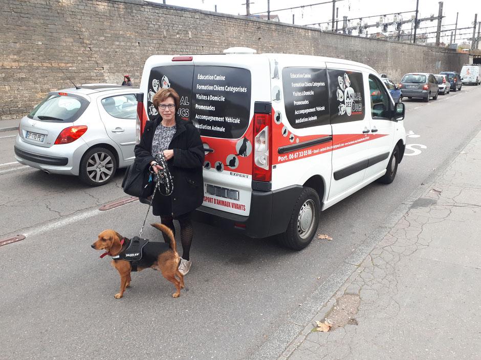 Julien HERBELOT Animal Des Ducs Accompagnement Véhiculé (Taxi Animalier)