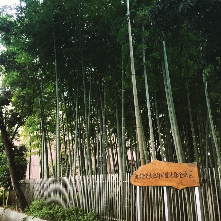Bamboo Forest in front of Komae station Tokyo Komae Odakyu line nature healing walking tourist spot TAMA Tourism Promotion - Visit Tama 狛江駅前の竹林 東京都狛江市 小田急線 自然 癒し 散策 観光スポット 多摩観光振興会