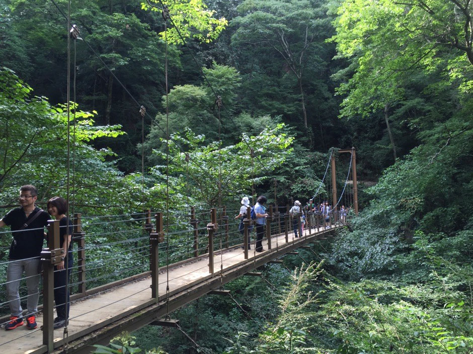 Suspention Bridge Trail No.4 at Mt. Takao Tokyo Hachioji mountain hiking nature healing retreat famous sightseeing tourist spot TAMA Tourism Promotion - Visit Tama  高尾山 4号路 吊り橋コース 東京都八王子市 自然 登山 ハイキング 癒し 有名観光スポット 多摩観光振興会