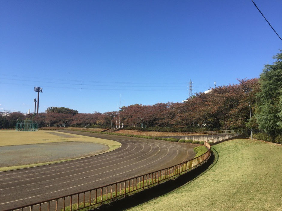 Track field at Tachikawa park Tokyo Tachikawa running sport activity red leaves season TAMA Tourism Promotion - Visit Tama  立川公園陸上競技場 東京都立川市 ランニング ジョギング スポーツ 秋 紅葉季節 多摩観光振興会