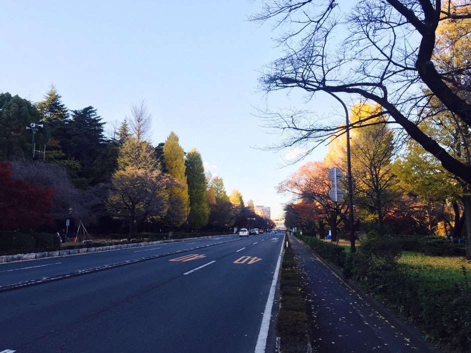 University Street at Hitotsubashi University Tokyo Kunitachi nature autumn fall redleaves ginkgo tree walking tourist spot TAMA Tourism Promotion - Visit Tama 大学通り 一橋大学周辺 東京都国立市 自然 紅葉 銀杏 秋冬 散策 観光スポット 多摩観光振興会