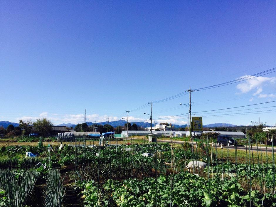 Landscape under blue sky Tokyo Akiruno Akigawa farmers center shopping tourist spot TAMA Tourism Promotion - Visit Tama 11月の風景 東京都あきる野市 秋川ファーマーズセンター 農産物直売所 買い物 ショッピング 観光スポット 多摩観光振興会