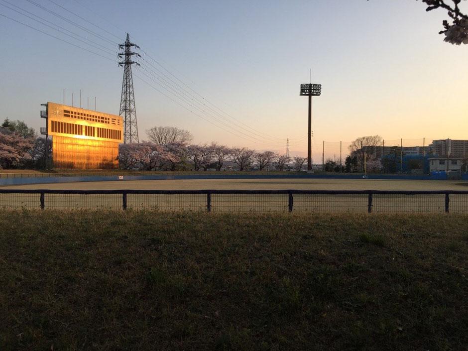 Tachikawa Municipal Baseball field Tokyo Tachikawa sports tachikawa park cherry blossom tourist spot TAMA Tourism Promotion - Visit Tama  市営立川球場 東京都立川市 スポーツ 立川公園 桜 観光スポット 多摩観光振興会