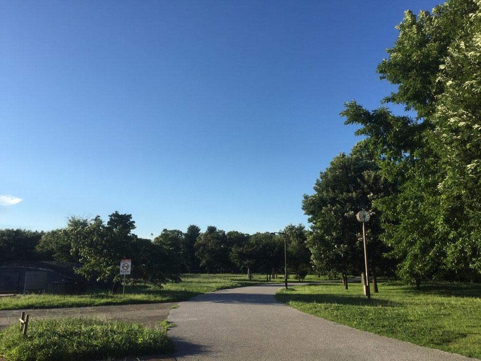 Musashino no mori Park Tokyo Mitaka Chofu Fuchu walking picnic historical tourist spot TAMA Tourism Promotion - Visit Tama 都立武蔵野の森公園 東京都三鷹市 調布市 府中市