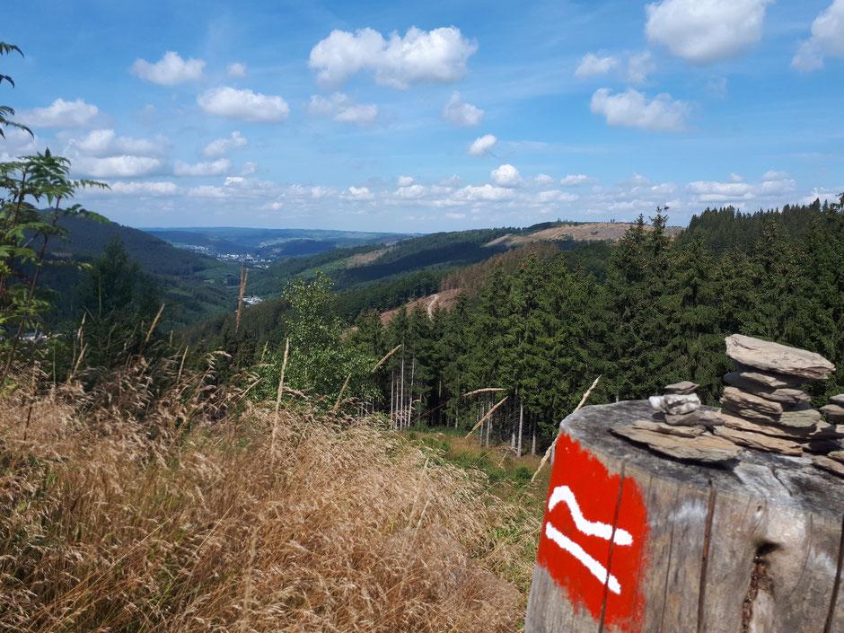 Rothaarsteig - Weg der Sinne (beginnt fast direkt an den Häusern am Wald, hier Ginsterkopf)
