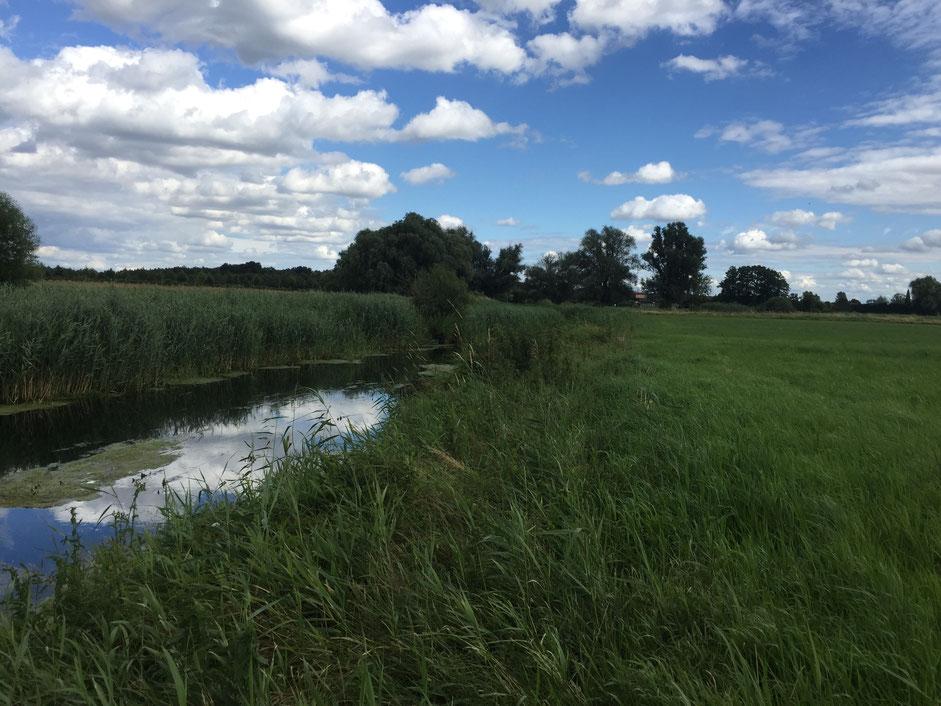 Die Welse, der Fluss durch Vierraden (1 km)