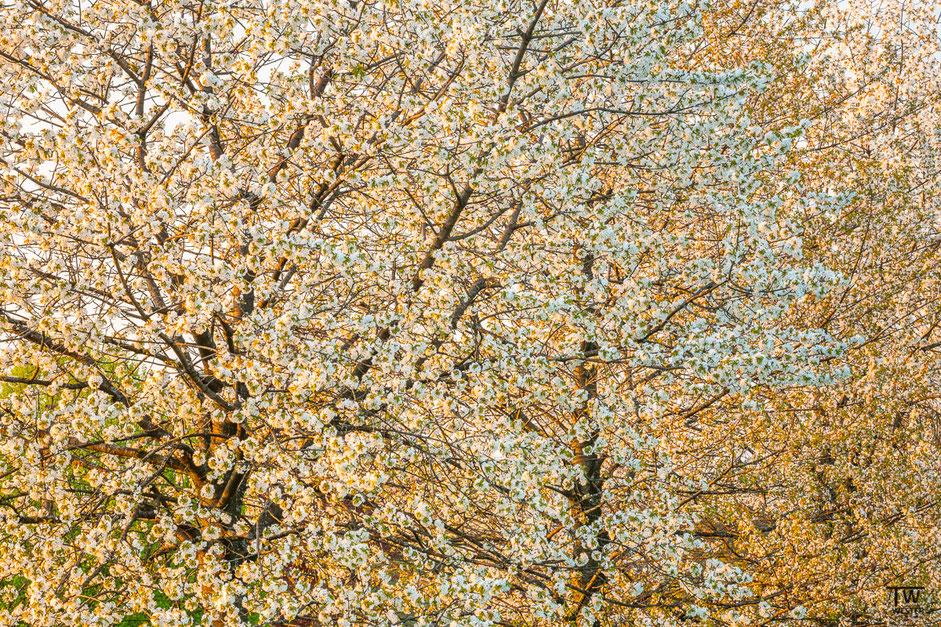 Frühling pur! (B1962)