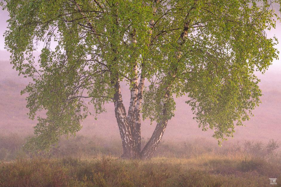 Im Abend-Nebel… (B1953)
