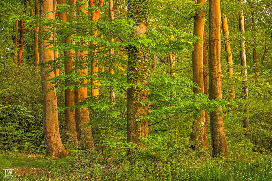 """""""Der Baum"""" (B1960)"""