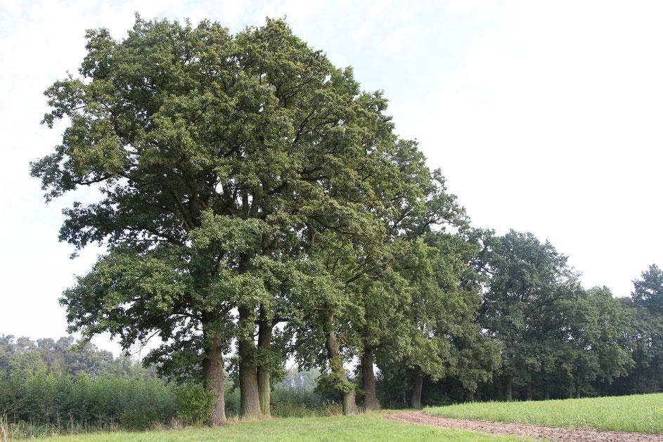Schutzgebiet Rainer Wald