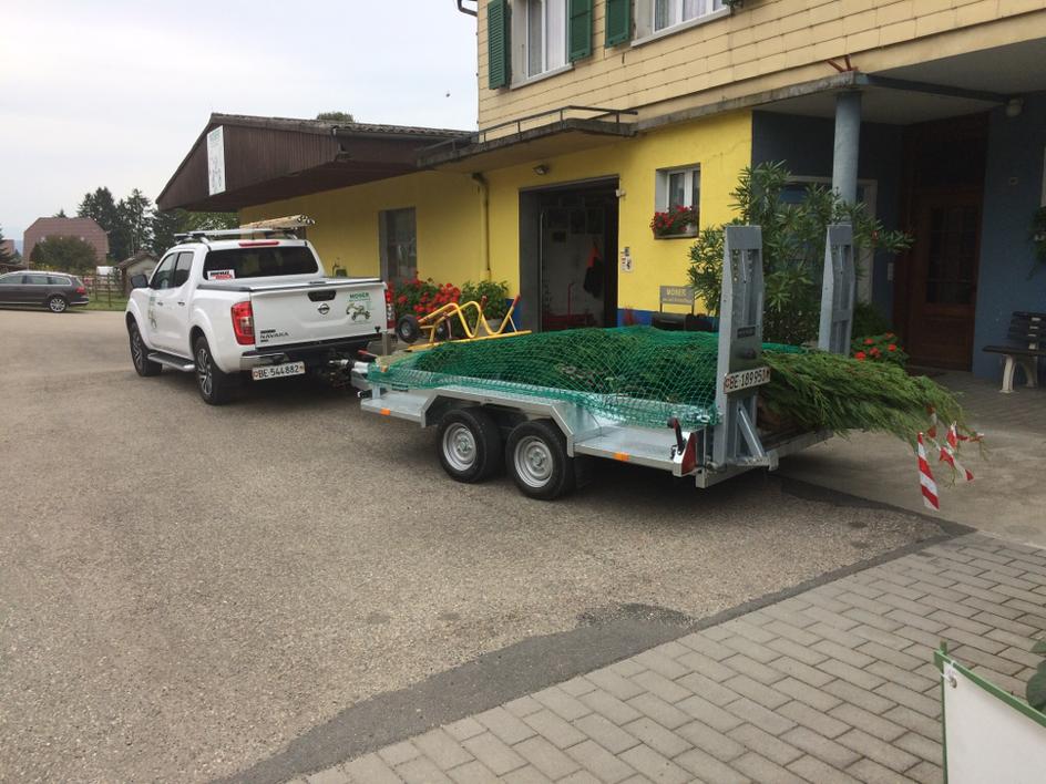 Eneuerung Hecke mit Leyland-Zypresse 250cm h (Studen)