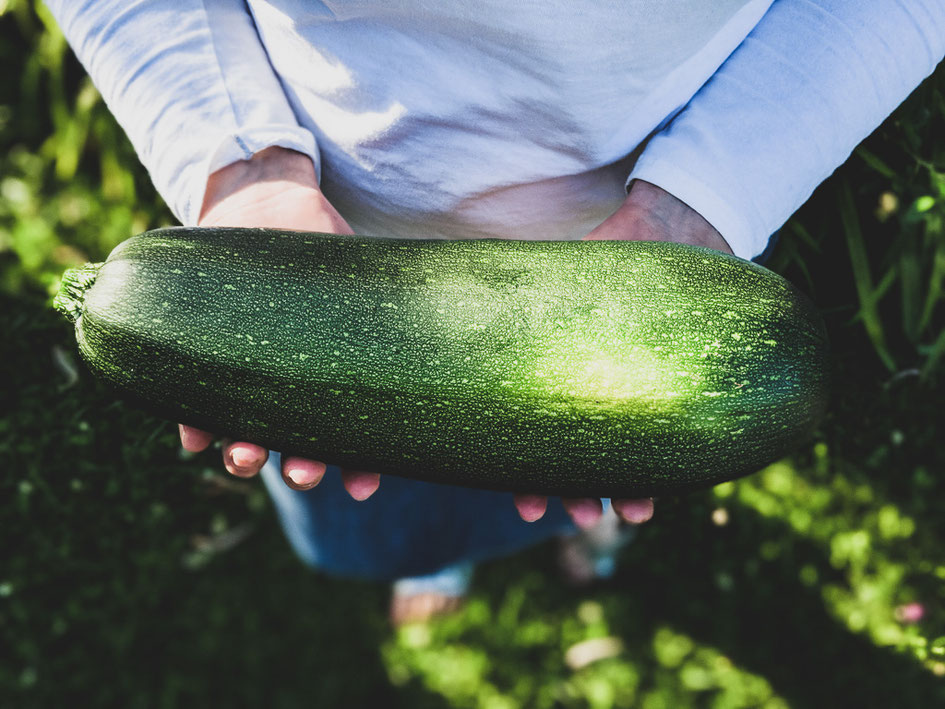 zucchini saison