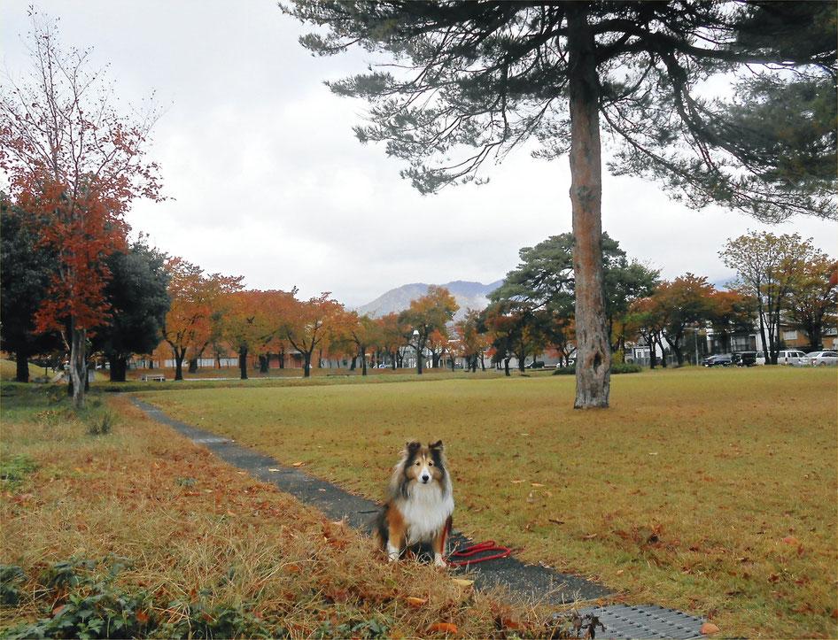 大毛無山:Mt. O-genashi