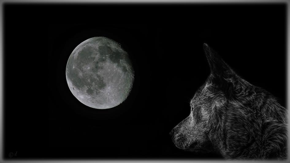 """Der """"Wolfsmond"""" (Eine von der HP-Herausgeberin zusammengestellte Fotocollage aus zwei Bildern: 1. Foto: Vollmond von HP-Herausgeberin & 2. Foto: Hund von Matej"""