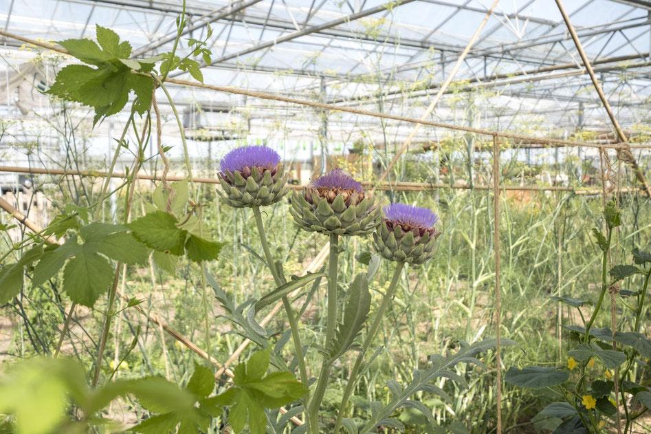 Pflanzensymbiosen