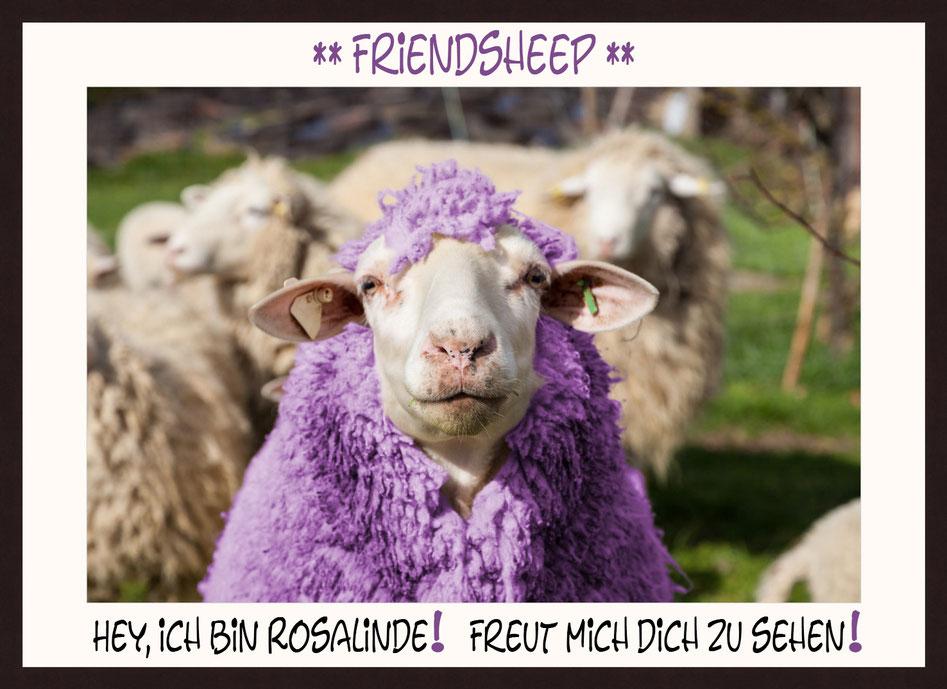 Schaf Rosalinde, Friendsheep, Hey, ich bin Rosalinde! Freut mich dich zu sehen.