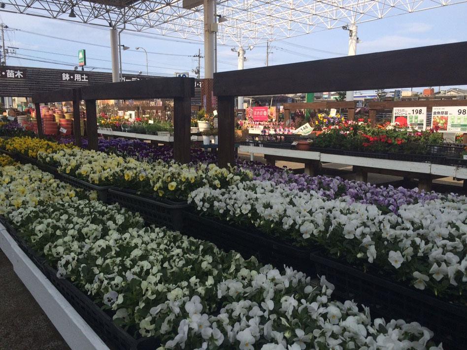 色とりどりの花が咲くガーデニングセンター