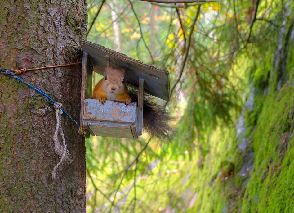 Eichhörnchen sitzt im Eichhörnchen Futterhaus: