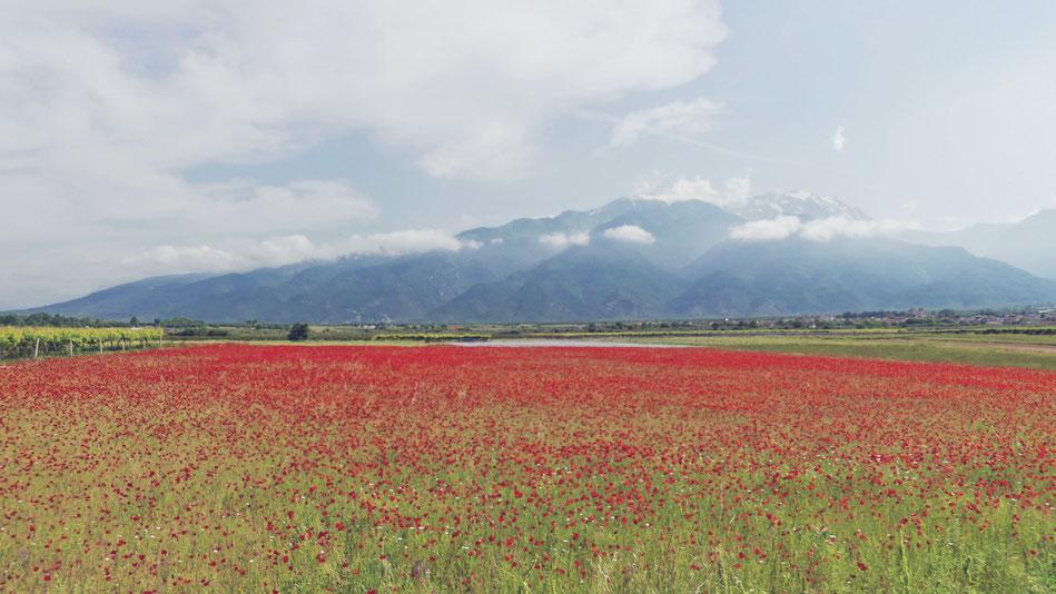 BIGOUSTEPPES MONT OLYMPE GRECE MACEDONIA