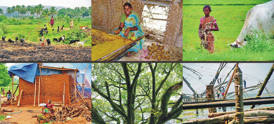 Tamil Nadu_ Ziegenherde ' Zuckerrohr-Siederei ' Strassenrand-Kuhweide ' Tonziegel-Brennerei | Mattancherry ' chinesische Fischernetze _Kerala