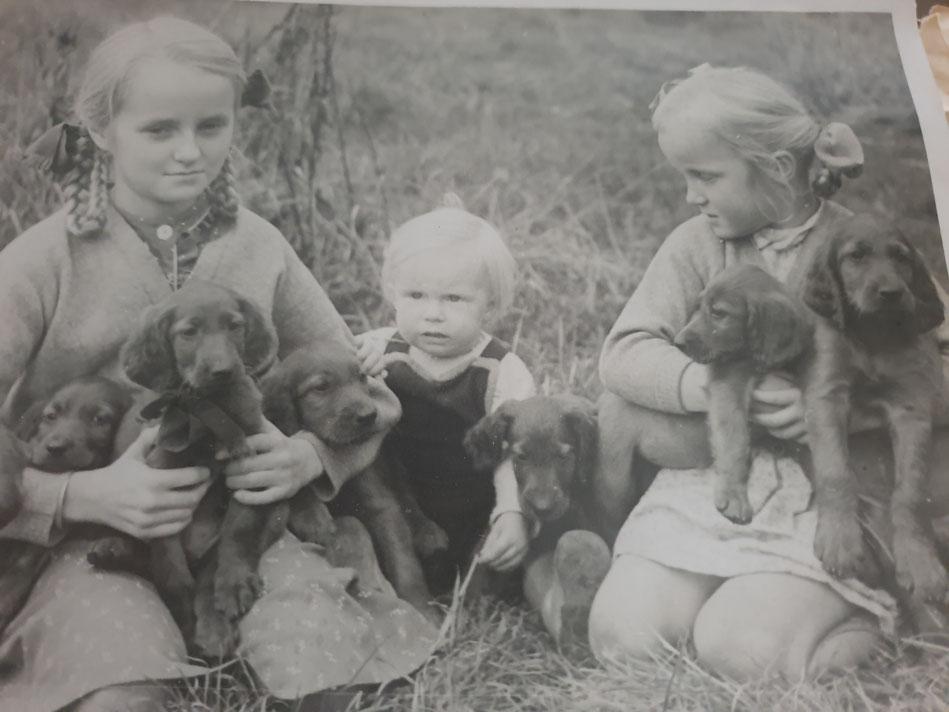Ein Bild aus längst verganger Zeit. Ca. 1948: meine Mutter Joy links, eine Cousine, Tante June rechts, mit einem Wurf Irish Setter Welpen.