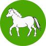 Krankheitsbilder bei Pferde