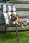 Tilly the dog, sunning herself in a comfy garden chair.