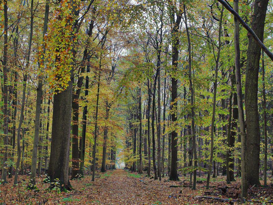 Herbstwald waldweg landschaft lippe